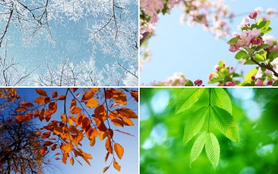 The seasons of our cycle: How to go with the flow throughout the month